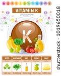 vitamin k supplement food icons.... | Shutterstock .eps vector #1019650018