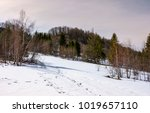 Mixed Forest Leafless Birch An...