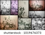 mold spreads over the wall set | Shutterstock . vector #1019676373