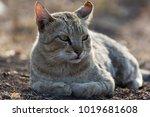 the cat portrait   Shutterstock . vector #1019681608