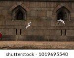 view of saint petersburg peter... | Shutterstock . vector #1019695540