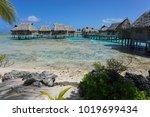 tropical island resort with... | Shutterstock . vector #1019699434