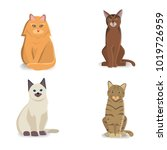 collection cats of different... | Shutterstock . vector #1019726959
