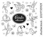 birds icons collection. vector... | Shutterstock .eps vector #1019735929