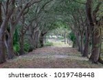 Tree Covered Path In The...