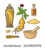 set panax ginseng. root  slice  ... | Shutterstock .eps vector #1019803996