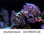 the most popular saltwater fish | Shutterstock . vector #1019804218