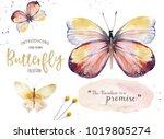set of watercolor butterfly.... | Shutterstock . vector #1019805274