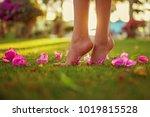 close up female crossed legs...   Shutterstock . vector #1019815528