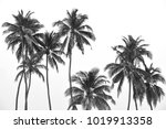 black and white palm trees... | Shutterstock . vector #1019913358
