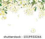 plumeria with watercolor... | Shutterstock . vector #1019933266