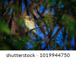 Small photo of Wing of the younger bird Young bird on branch.
