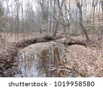 A Wide Creek In A Forest Of...
