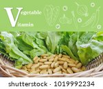 chinese kale.there are many... | Shutterstock . vector #1019992234
