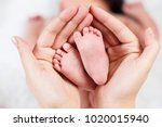 close up tiny baby feet in... | Shutterstock . vector #1020015940