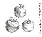vector set of full tomatoes... | Shutterstock .eps vector #1020029698