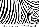 realistic abstract zebra skin... | Shutterstock .eps vector #1020059683