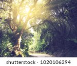 garden with olive trees and hot ... | Shutterstock . vector #1020106294