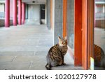 Tabby Cat Waiting Outside Flat...