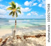 tall palmtree on secluded beach ... | Shutterstock . vector #1020175438