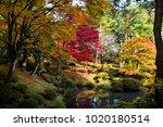 november 15  2017   red leaves... | Shutterstock . vector #1020180514