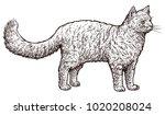 standing cat illustration ... | Shutterstock .eps vector #1020208024