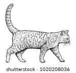 Walking Cat Illustration ...