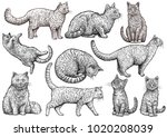 cat collection illustration ... | Shutterstock .eps vector #1020208039