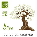 an old olive tree and an... | Shutterstock .eps vector #102022789