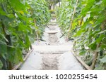 walk way of garden is a long... | Shutterstock . vector #1020255454