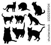 black silhouette of cat sitting ... | Shutterstock .eps vector #1020255934