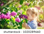 little child smelling lilac... | Shutterstock . vector #1020289660