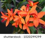 Fresh Beautiful Orange Orchid...