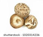 shiitake mushroom isolated on... | Shutterstock . vector #1020314236