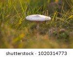 mushrooms in epic warm light in ... | Shutterstock . vector #1020314773