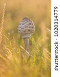 mushrooms in epic warm light in ... | Shutterstock . vector #1020314779