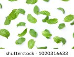 peppermint on white background. ... | Shutterstock . vector #1020316633