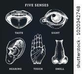 images set of five human senses ... | Shutterstock .eps vector #1020342748