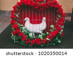 two white wedding pigeons in... | Shutterstock . vector #1020350014