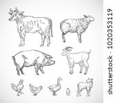 hand drawn domestic animals set.... | Shutterstock .eps vector #1020353119