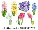 bouquet of colorful spring... | Shutterstock . vector #1020383239