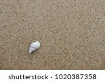 fossil shell on the sand beach  ... | Shutterstock . vector #1020387358