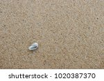 fossil shell on the sand beach  ... | Shutterstock . vector #1020387370
