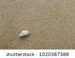 fossil shell on the sand beach  ... | Shutterstock . vector #1020387388