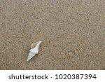 fossil shell on the sand beach  ...   Shutterstock . vector #1020387394
