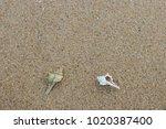 fossil shell on the sand beach  ...   Shutterstock . vector #1020387400