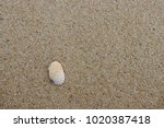 fossil shell on the sand beach  ... | Shutterstock . vector #1020387418