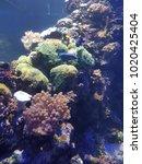 aquarium saltwater coral reef... | Shutterstock . vector #1020425404