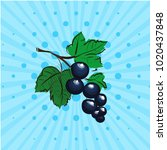black currant on a blue... | Shutterstock .eps vector #1020437848