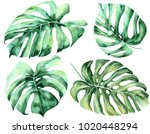 tropical leaves set. jungle... | Shutterstock . vector #1020448294